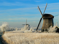 Molens / Windmills - Rustenburg, The Netherlands